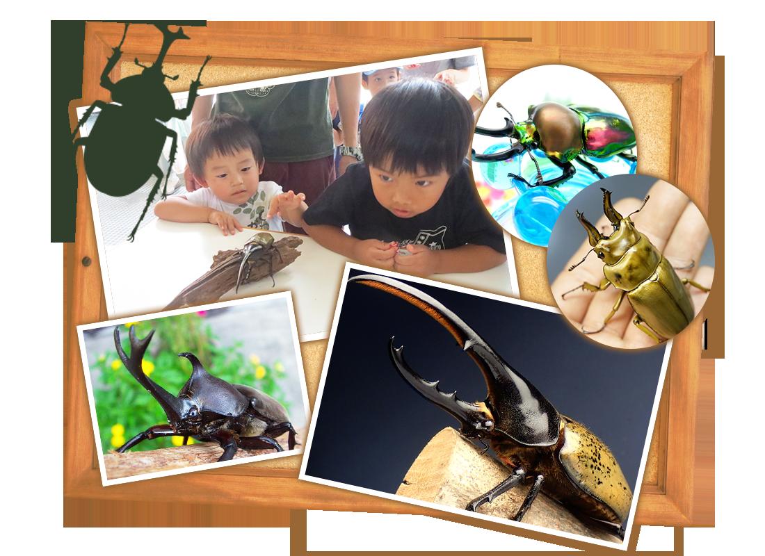 トロールの昆虫コレクション